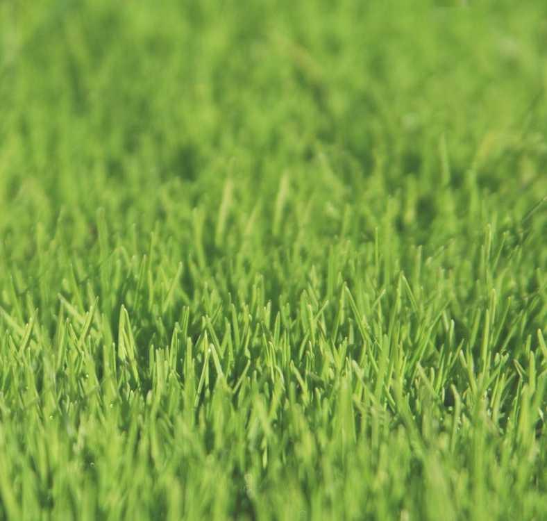 instant lawn randburg & sandton
